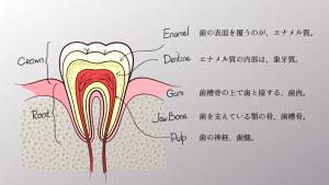 歯周病治療ならつるみ矯正歯科へ